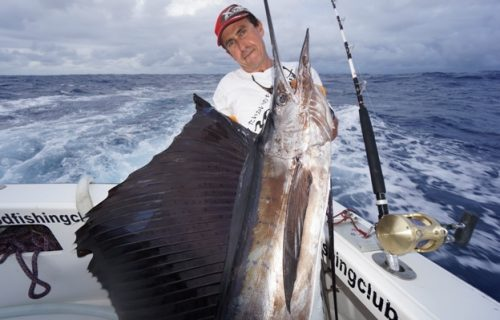 Nice sailfish - Rod Fishing Club - Rodrigues Island - Mauritius - Indian Ocean