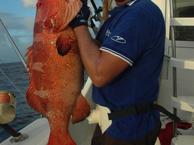 Red coral trout on jigging - Rod Fishing Club - Rodrigues Island - Mauritius - Indian Ocean