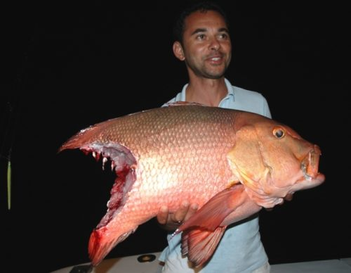 Red snapper cut on baiting - Rod Fishing Club - Rodrigues Island - Mauritius - Indian Ocean