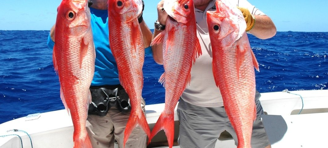 Rosy job fish or flame snapper or Etelis coruscans - Rod Fishing Club - Rodrigues Island - Mauritius - Indian Ocean
