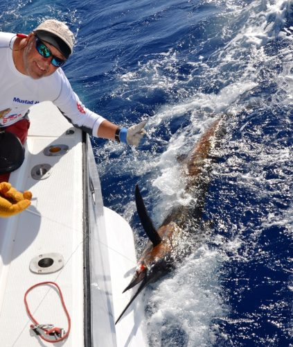 Sailfish released by Marc - Rod Fishing Club - Rodrigues Island - Mauritius - Indian Ocean