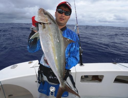 Seriola on jigging - Rod Fishing Club - Rodrigues Island - Mauritius - Indian Ocean