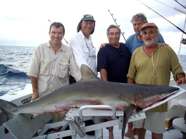 Shark on baiting - Rod Fishing Club - Rodrigues Island - Mauritius - Indian Ocean