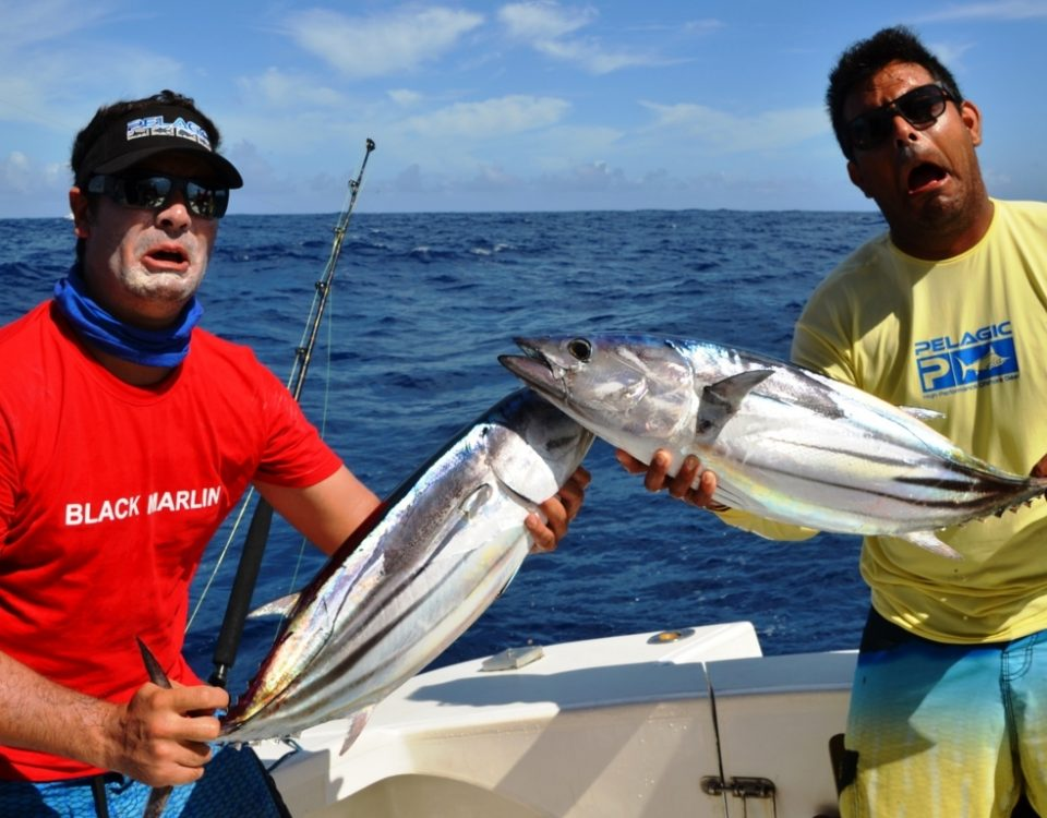 Skipjack tuna or Katsuwonus pelamis - Rod Fishing Club - Rodrigues Island - Mauritius - Indian Ocean