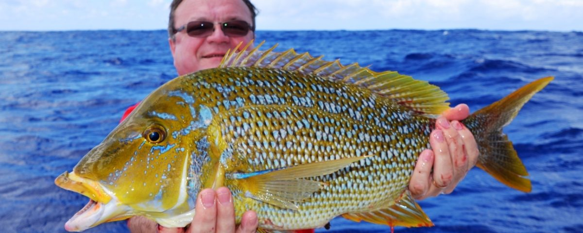 Spangled emperor or Lethrinus nebulosus - Rod Fishing Club - Rodrigues Island - Mauritius - Indian Ocean