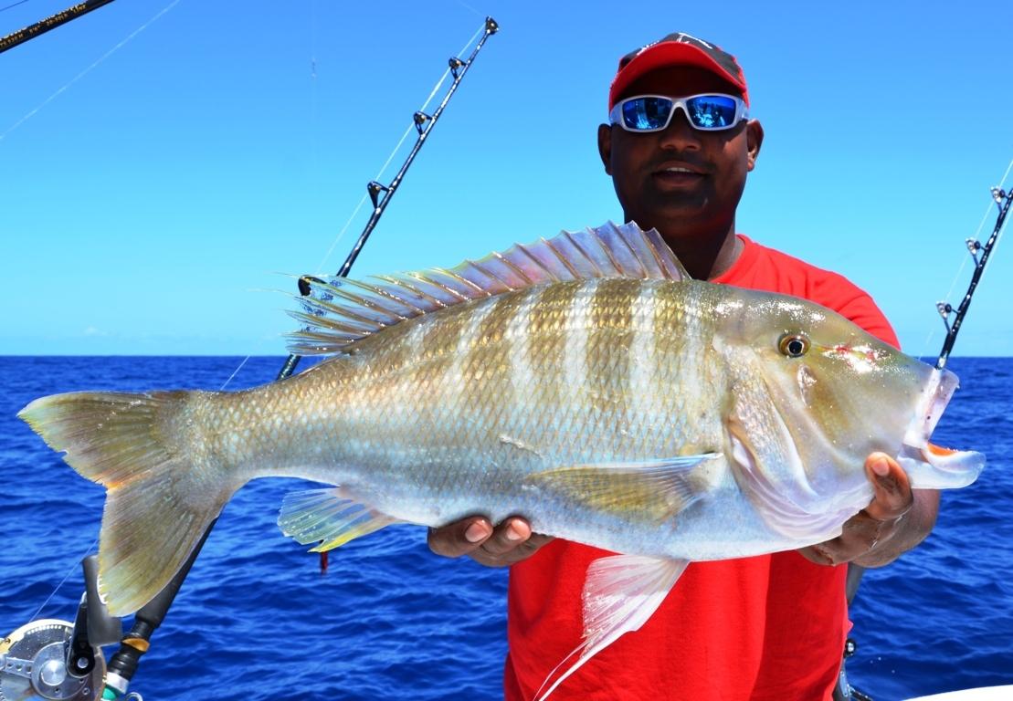 Variété de capitaine en pêche à la palangrotte à bord de Black Marlin - Rod Fishing Club - Ile Rodrigues - Maurice - Océan Indien-
