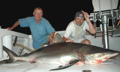 Whitetip shark on baiting at night - Rod Fishing Club - Rodrigues Island - Mauritius - Indian Ocean
