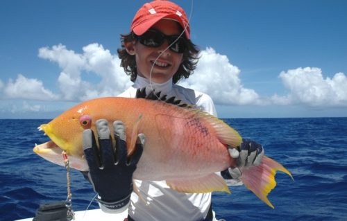 Yellow head wrasse on jigging - Rod Fishing Club - Rodrigues Island - Mauritius - Indian Ocean