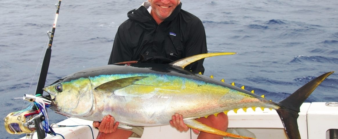 Yellowfin tuna or Thunnus albacares - Rod Fishing Club - Rodrigues Island - Mauritius - Indian Ocean