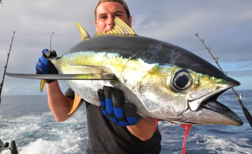 Yellowfin tunas'colors - Rod Fishing Club - Rodrigues Island - Mauritius - Indian Ocean