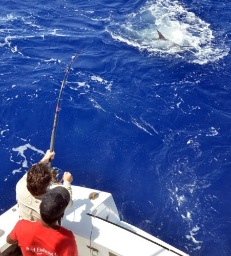 black marlin close to the boat on Heavy Spinning by Claudius - Rod Fishing Club - Rodrigues Island - Mauritius - Indian Ocean