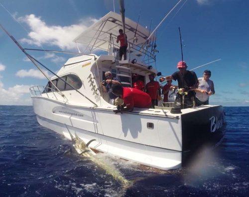 black marlin on lining - Rod Fishing Club - Rodrigues Island - Mauritius - Indian Ocean