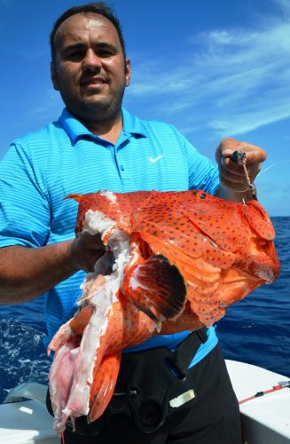 cutting grouper (coral trout) - Rod Fishing Club - Rodrigues Island - Mauritius - Indian Ocean