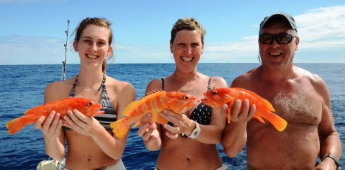 family groupers on bottomfishing- Rod Fishing Club - Rodrigues Island - Mauritius - Indian Ocean