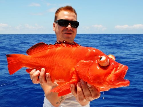 golden hind - Rod Fishing Club - Rodrigues Island - Mauritius - Indian Ocean