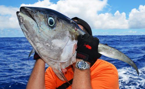 head of yellowfin tuna after shark - Rod Fishing Club - Rodrigues Island - Mauritius - Indian Ocean