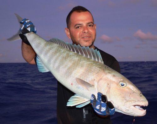 jobfish - Rod Fishing Club - Rodrigues Island - Mauritius - Indian Ocean