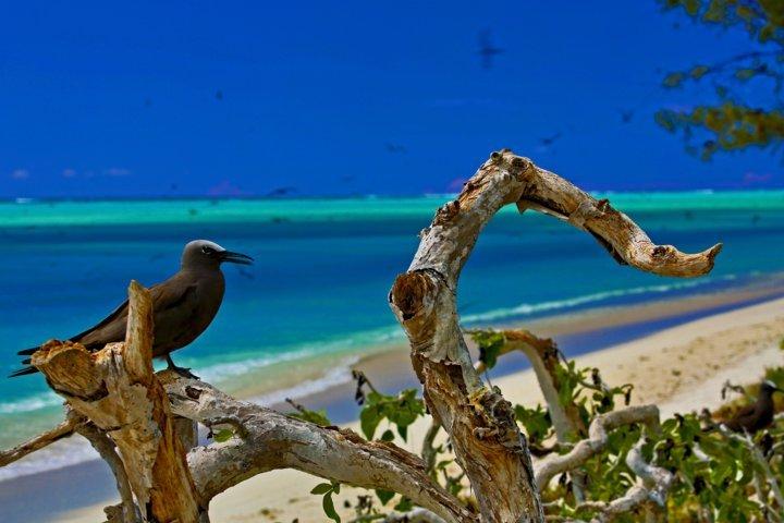 oiseau à l'île aux cocos - Rod Fishing Club - Ile Rodrigues - Maurice - Océan Indien - crédit photo Serge Marizy pour Zone Australe