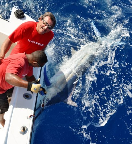 over 150kg black marlin released - Rod Fishing Club - Rodrigues Island - Mauritius - Indian Ocean