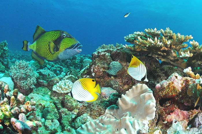 plongée - crédit photo Cotton dive center - Rod Fishing Club - Ile Rodrigues - Maurice - Océan Indien_1