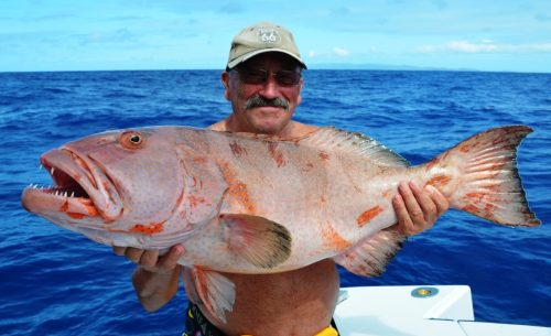 red coral trout - Rod Fishing Club - Rodrigues Island - Mauritius - Indian Ocean