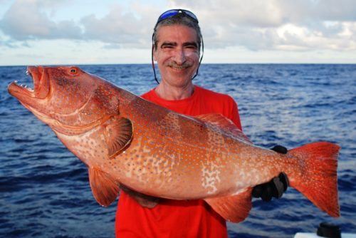 red coral trout (grouper) on jigging - Rod Fishing Club - Rodrigues Island - Mauritius - Indian Ocean