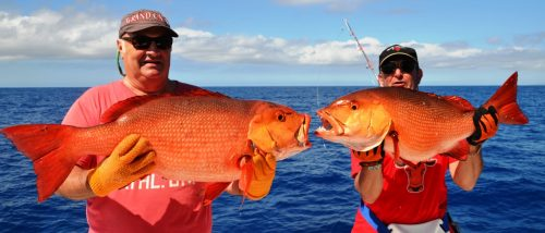 red snappers - Rod Fishing Club - Rodrigues Island - Mauritius - Indian Ocean