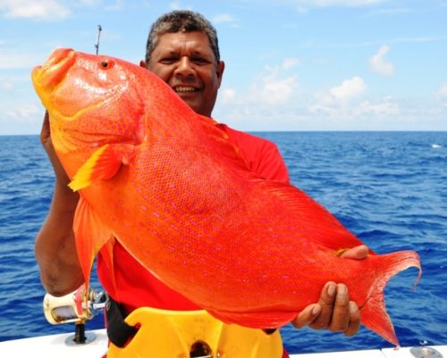 yellow moontail sea bass - Rod Fishing Club - Rodrigues Island - Mauritius - Indian Ocean