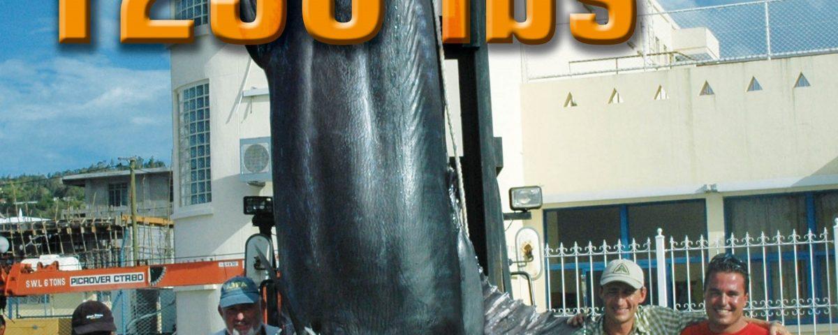 561.5kg Pacific blue marlin world record 80lb on trolling - 30 01 2007