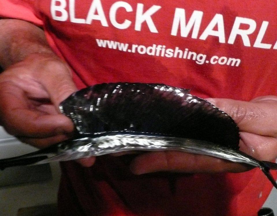 Bébé voilier - Rod Fishing Club - Ile Rodrigues - Maurice - Océan Indien