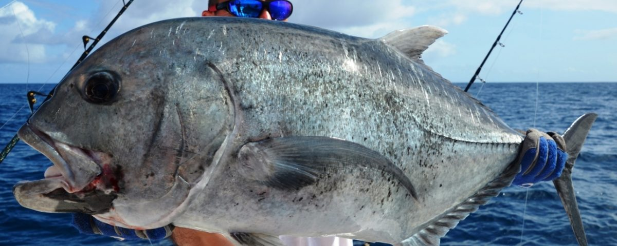 Giant Trevally released on jigging by Michel - Rod Fishing Club - Rodrigues Island - Mauritius - Indian Ocean