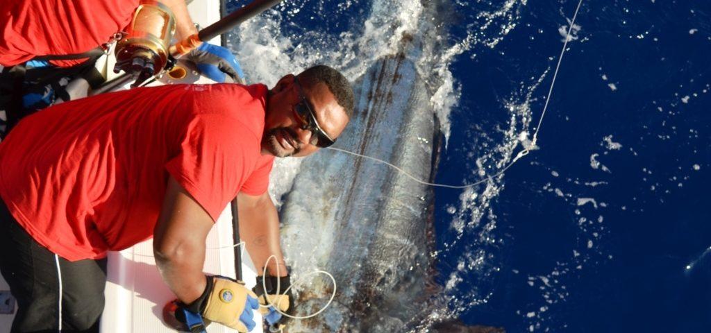 Marlin bleu 200kg relâché par Frans en Décembre 2015 - Rod Fishing Club - Ile Rodrigues - Maurice - Océan Indien