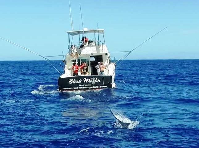 Marlin jumping on quadcopter - Rod Fishing Club - Rodrigues Island - Mauritius - Indian Ocean
