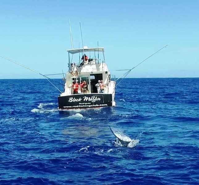 Marlin vu du drône - Rod Fishing Club - Ile Rodrigues - Maurice - Océan Indien
