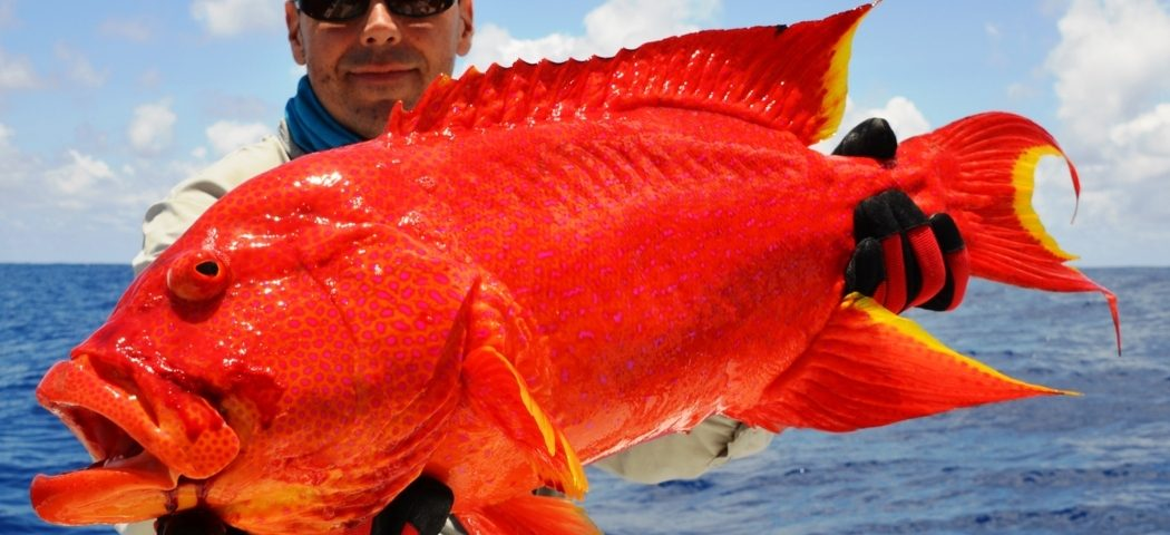 Red Corail Trout on jigging - Rod Fishing Club - Rodrigues Island - Mauritius - Indian Ocean