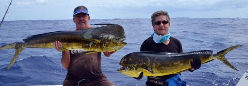 double-strike-of-dorados-caught-on-heavy-spinning-rod-fishing-club-rodrigues-island-mauritius-indian-ocean