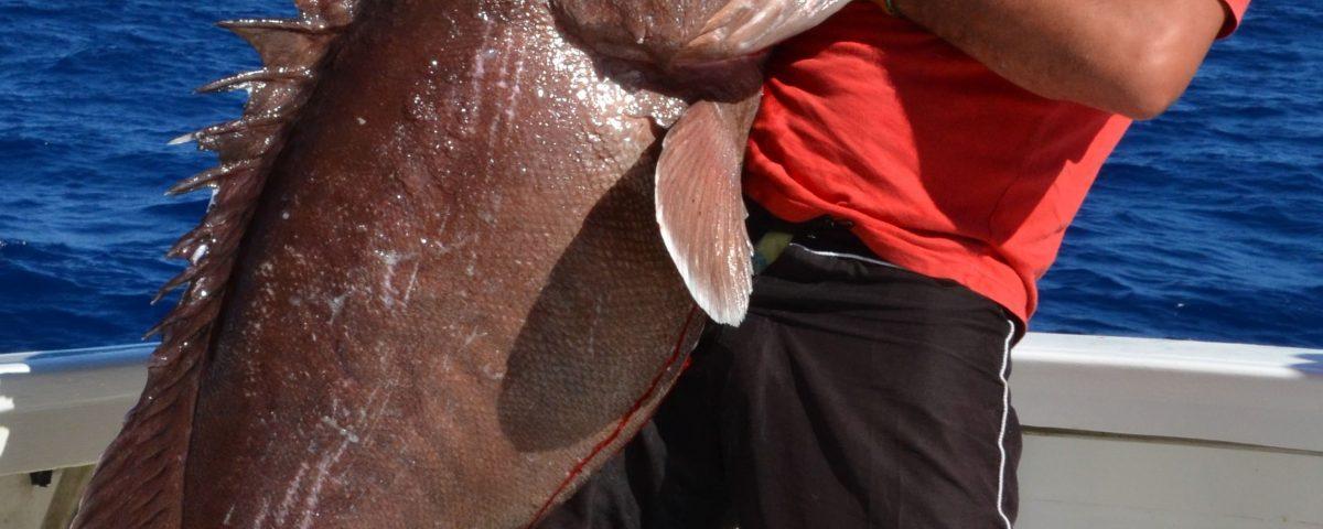 merou-brun-de-40kg-pris-en-peche-a-lappat-en-grande-profondeur-315m-rod-fishing-club-rodrigues-maurice-ocean-indien