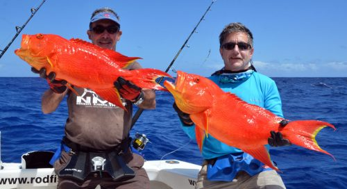 moon-tail-sea-bass-caught-on-jigging-on-the-eastern-bank-rod-fishing-club-rodrigues-island-mauritius-indian-ocean