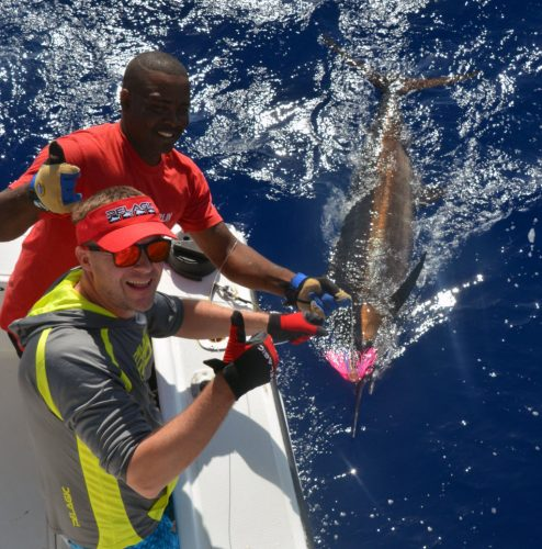 80kg-blue-marlin-on-trolling-before-releasing-rod-fishing-club-rodrigues-island-mauritius-indian-ocean
