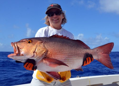nice-red-snapper-on-baiting-by-christine-before-releasing-rod-fishing-club-rodrigues-island-mauritius-indian-ocean