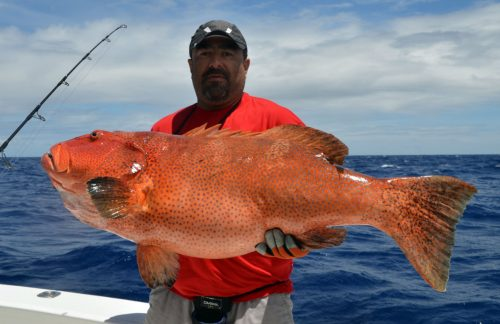Huge red corail trout caught on jigging by Malik - www.rodfishingclub.com - Rodrigues Island - Mauritius - Indian Ocean
