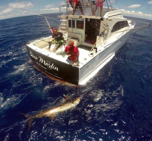 Marlin bleu au bas de ligne - www.rodfishingclub.com - Ile Rodrigues - Maurice - Océan Indien