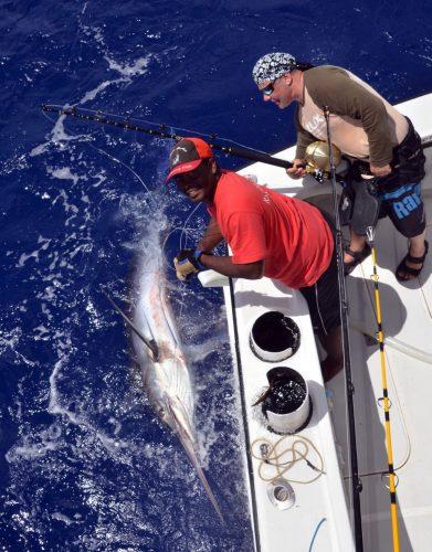 Marlin noir de 150kg pris en pêche au vif par Bruno - www.rodfishingclub.com - Ile Rodrigues - Maurice - Océan Indien