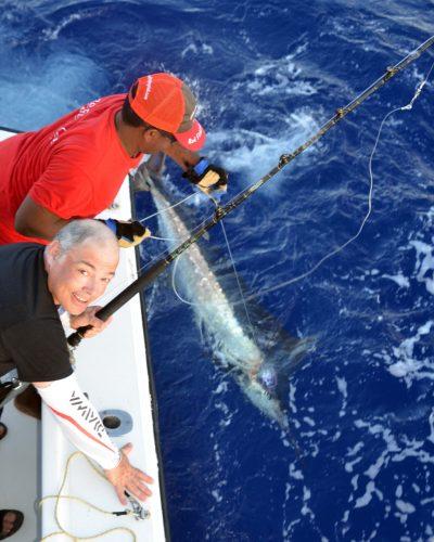Petit marlin bleu au bateau pris en pêche a la traîne par Bruno avant la relâche - www.rodfishingclub.com - Ile Rodrigues - Maurice - Océan Indien