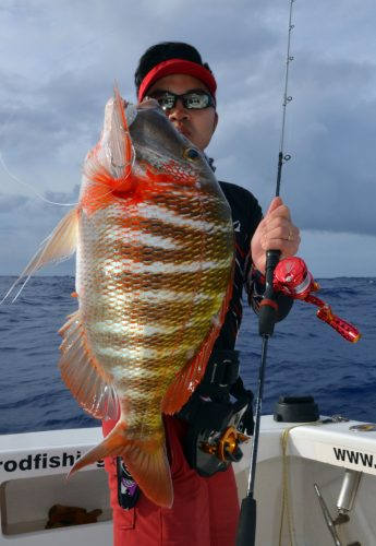 Lethrinus mahsena or Sky emperor for Mr Lure on slow jigging - www.rodfishingclub.com - Rodrigues Island - Mauritius - Indian Ocean