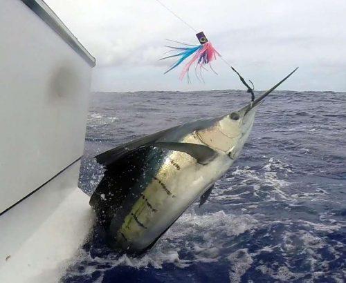 Voilier au saut en pêche a la traine - www.rodfishingclub.com - Ile Rodrigues - Maurice - Océan Indien
