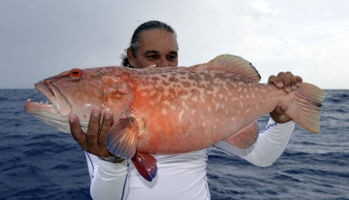 Big red corail trout by Tof on jigging - www.rodfishingclub.com - Rodrigues Island - Mauritius - Indian Ocean