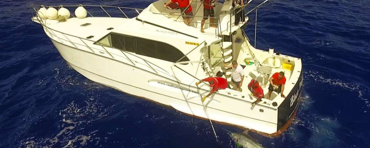 Black marlin from drone - www.rodfishingclub.com - Rodrigues Island - Mauritius - Indian Ocean