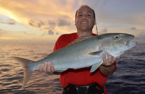 Jobfish on baiting for Léo - www.rodfishingclub.com - Rodrigues Island - Mauritius - Indian Ocean