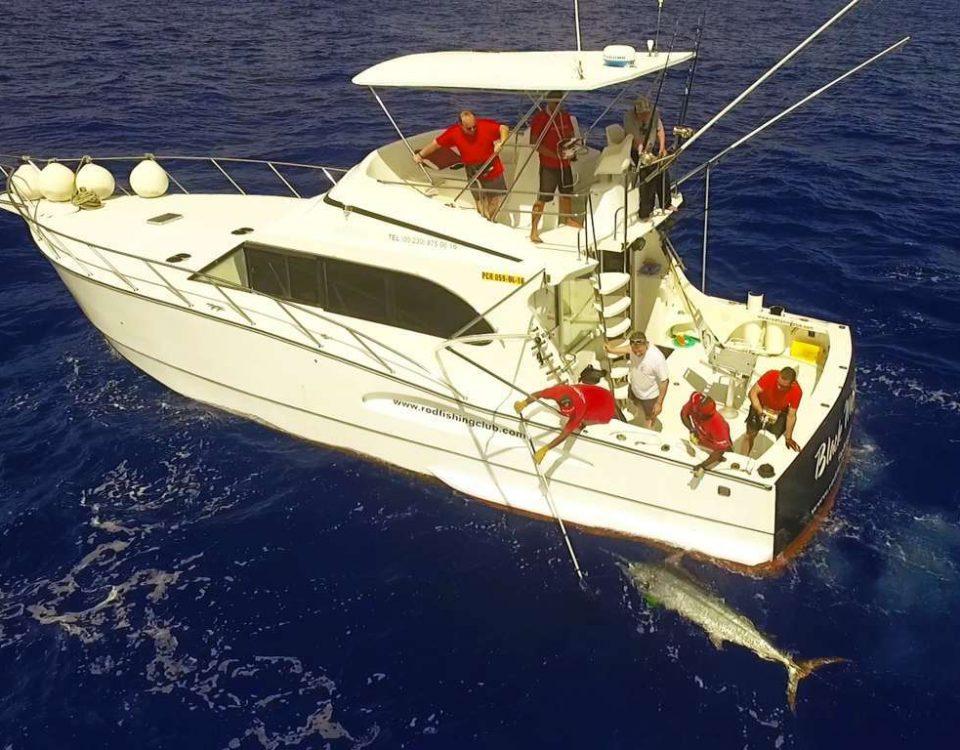 Marlin noir arrivant au bateau vu d'un drone - www.rodfishingclub.com - Ile Rodrigues - Maurice - Océan IndienMarlin noir arrivant au bateau vu d'un drone - ww.rodfishingclub.com - Ile Rodrigues - Maurice - Océan Indien